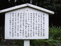 2006_11230034