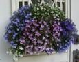 2010 春~初夏