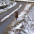 里山に初雪が降ったよ~